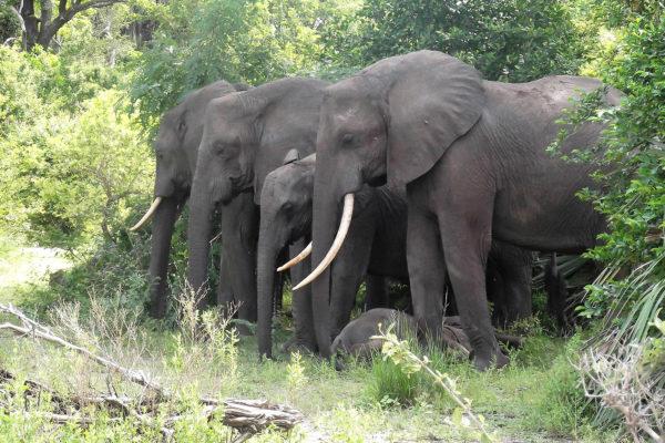 africa safari selous 03